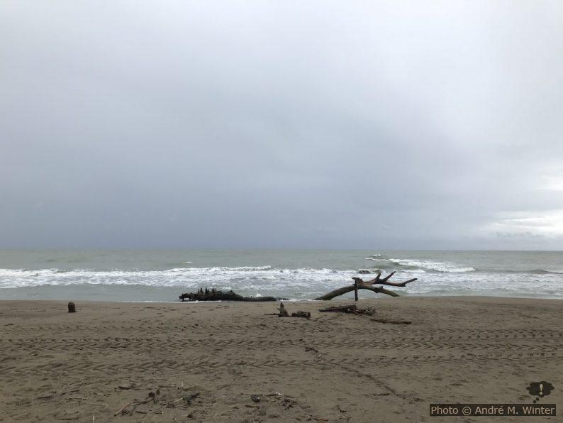 Bois mort à la plage de Marina di Alberese